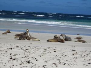Einige Seelöwen sind für einen kurzen Moment wach